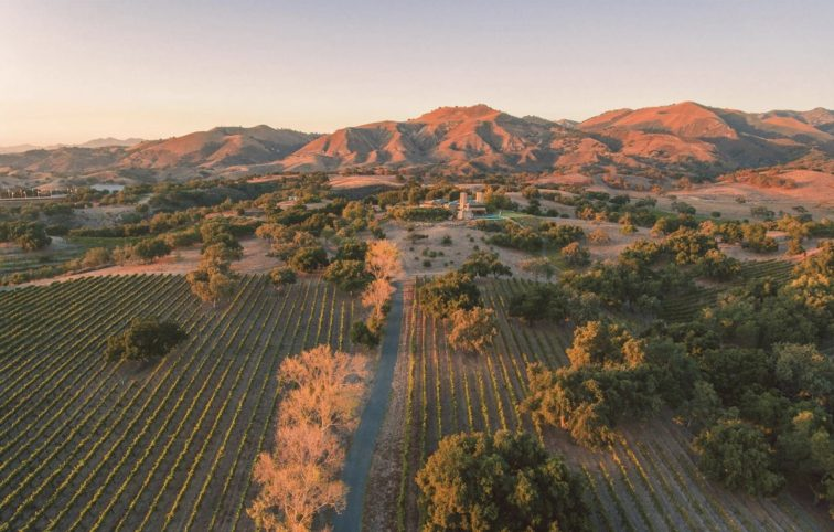 Aerial view of luxury ranch and olive grove in Los Olivos, California.