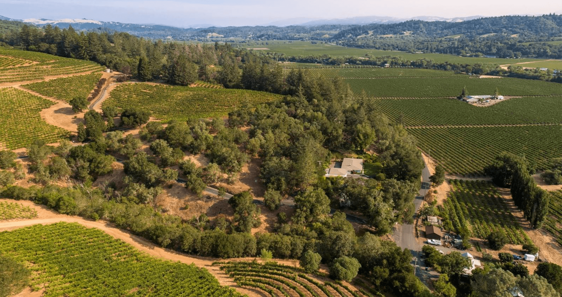 blanch ranch vineyard aerial view