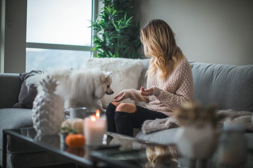 Exploring Real estate market during quarantine at home with white Pomeranian pat